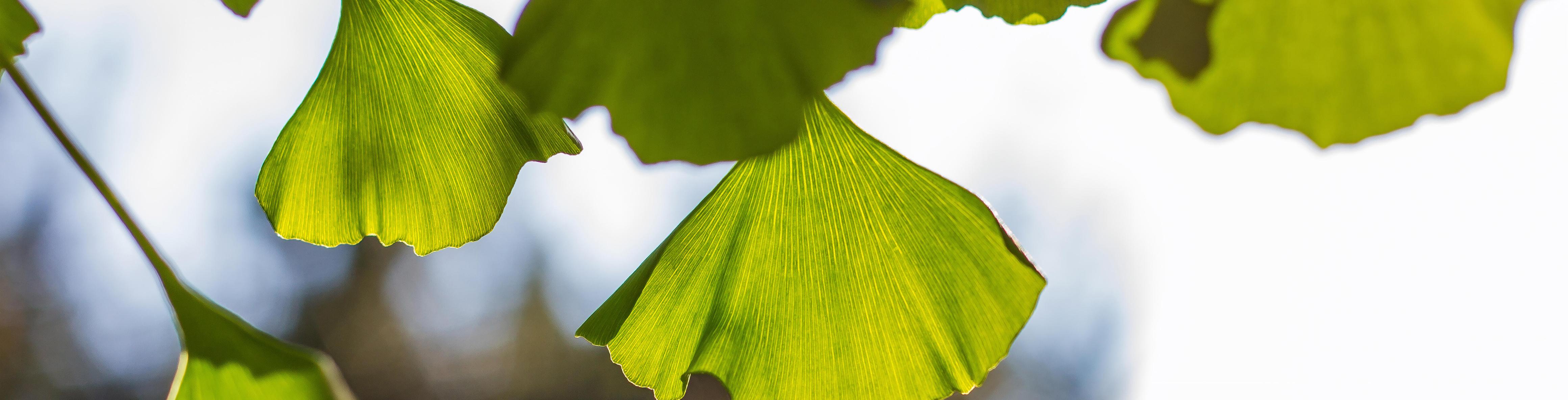 Bekijk de NatuurApotheek hier in een virtuele rondleiding